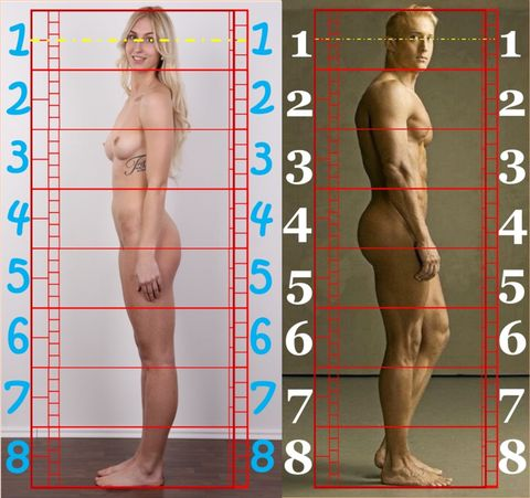 Fairbanks Human Proportion Figure. Human Proportions for Artists by Avard T. Fairbanks  (Author), Eugene F. Fairbanks (Author). Head Division Grid Template Overlay. OmegaJack 2000 collection. - See this image on Photobucket.