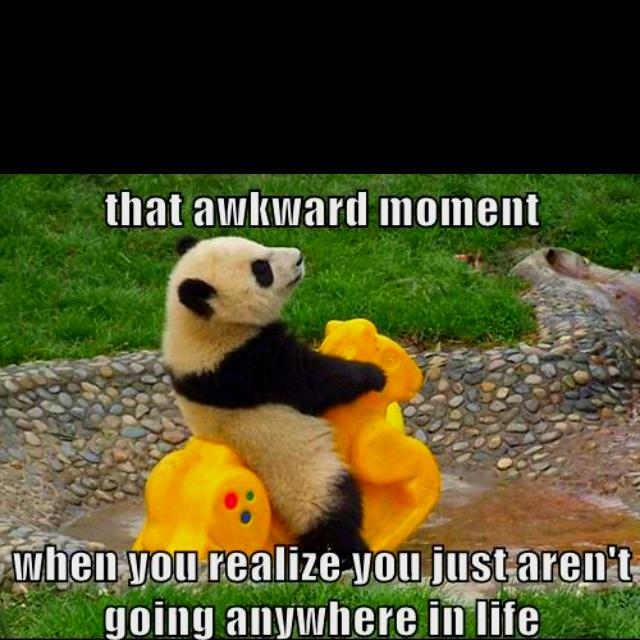 Pandas Baby Baby Pandas Rocks Horses So Cute Funny Bears