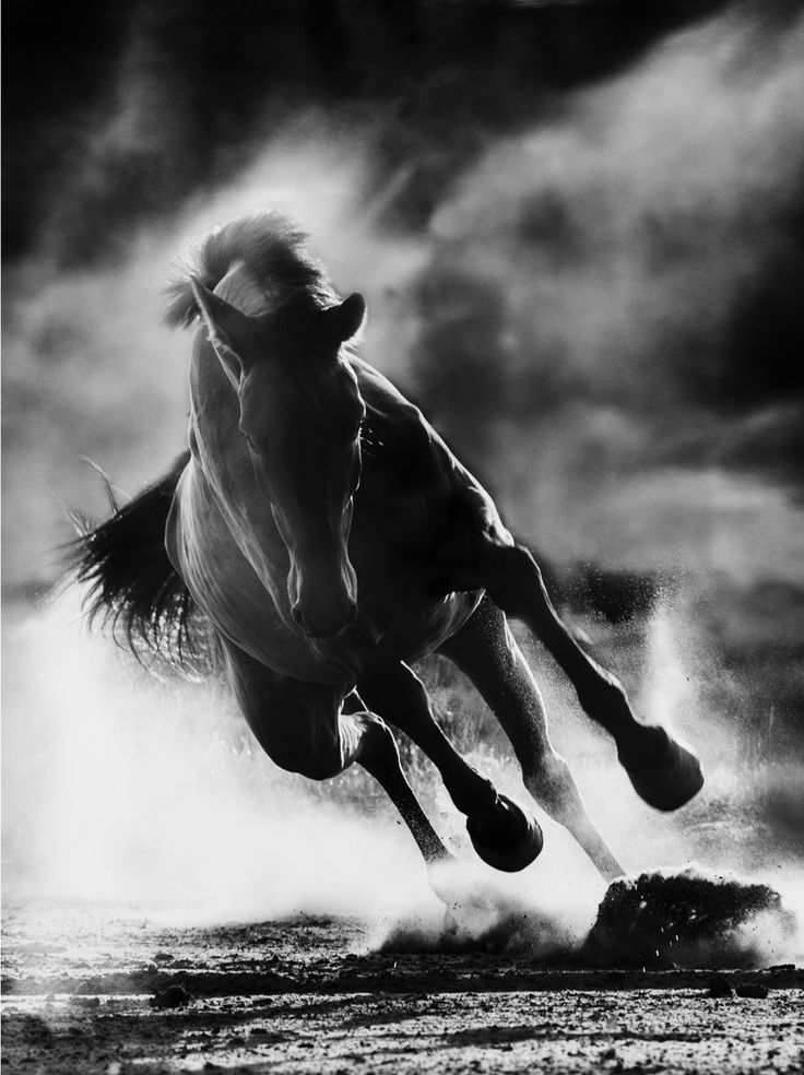 Black beauty, horse, hest, animal, beautiful, dust, movement, gorgeous, photo b/w.