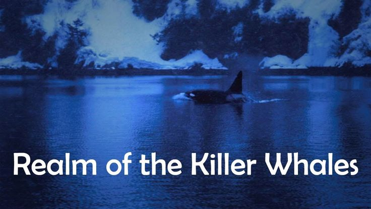 Best Nature Documentaries On Killer Whales