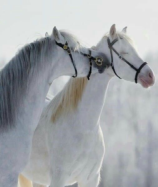 Dreamy horse kiss. Look at those sweet closed eyes.