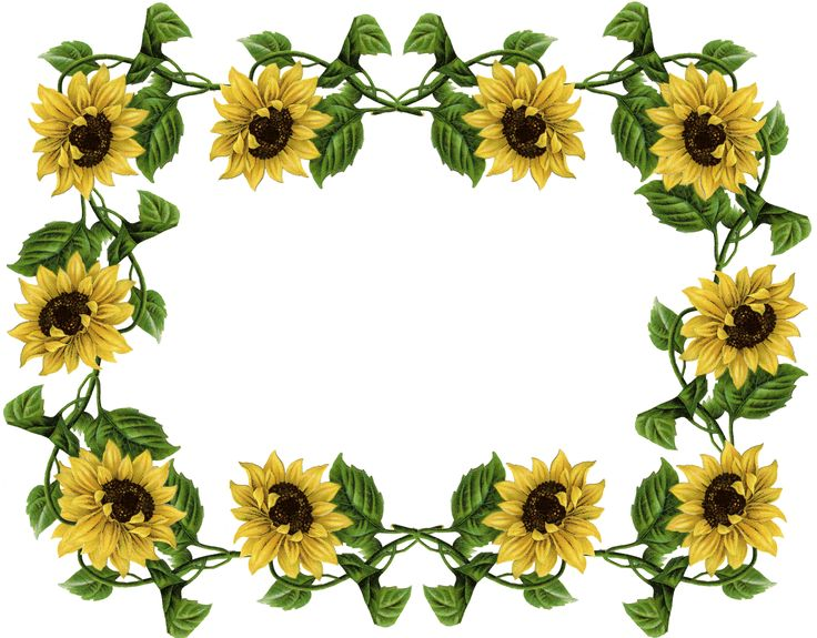 sunflower pics frame sunflowers