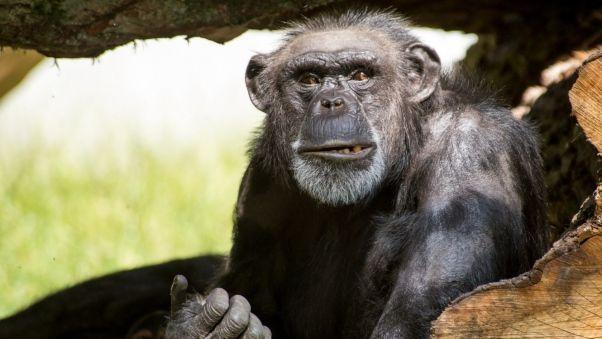 Wallpaper monkey, face, color