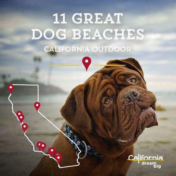 8 Dog Friendly California Hotels Dog Beach California Dog