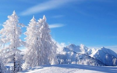 White winter wallpaper