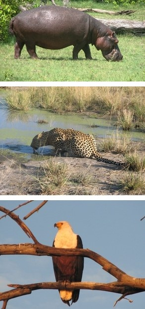 Botswana Safaris to Savuti Camp in the Linyanti Wildlife Reserve