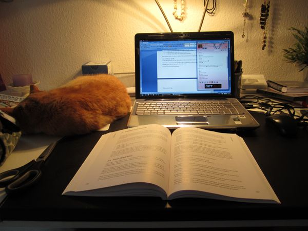 Studying with a cat <3