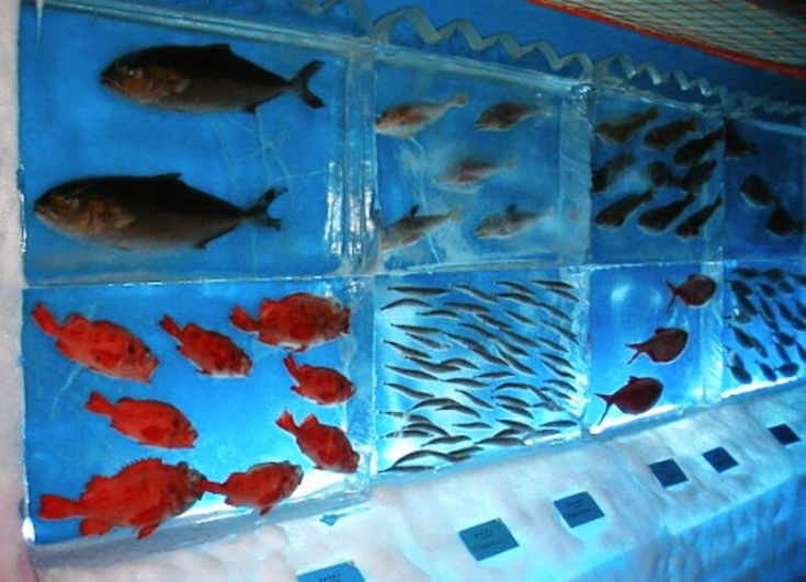 cool fish tanks Octopus, crab and other fish are flash frozen and ...
