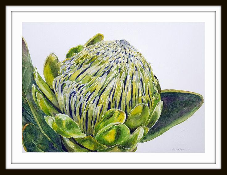 Green protea 1 Artist Lorna Pauls  Done March 2017 Watercolour on quarter sheet Bockingford