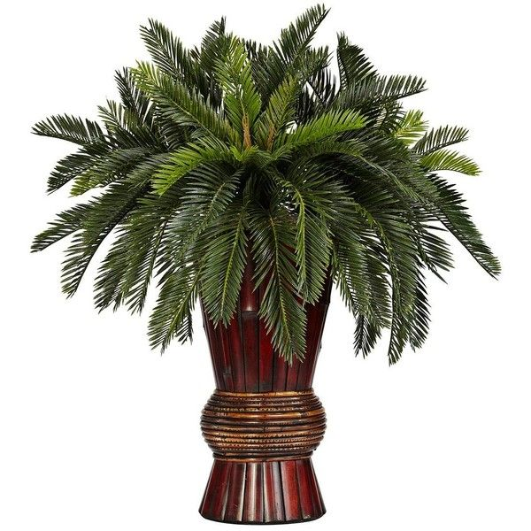 Oriental Cycas Grass Faux Plant in a Bamboo Vase ($110) ❤ liked on Polyvore featuring home, home decor, floral decor, plants, home accessories, asian planter, bamboo planter, asian home decor, green home decor and watering pot