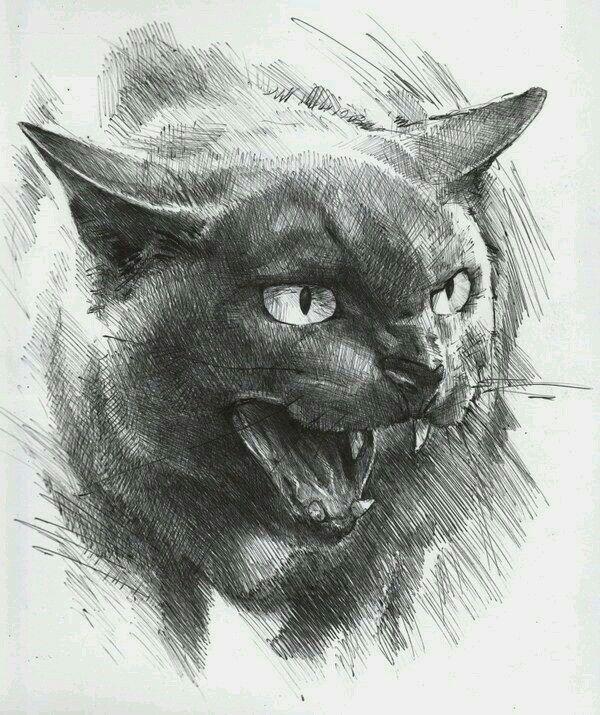 Странные картинки кошек карандашом