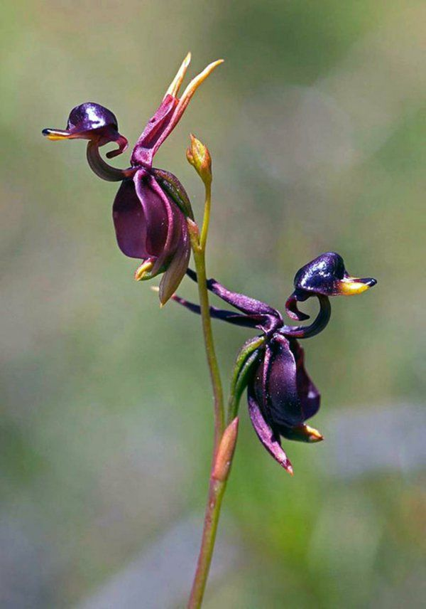 Blumenarten, die wie Tiere und Vögel aussehen