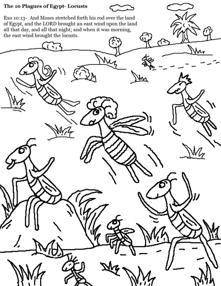 The 10 plagues of egypt locusts coloring 1 019 for Locust coloring page