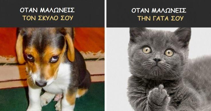 13 Αστείες Εικόνες που αποδεικνύουν ότι οι Σκύλοι και οι Γάτες είναι από Διαφορετικούς Κόσμους. Η #10 θα σας πείσει στο 100%! Crazynews.gr