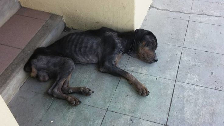 LORD HAVE MERCY!!!!!!!!!   DEMAND The Government of St Vincent & The Grenadines Prime Ministers Office STOP ANIMAL CRUELTY & Enforce Animal Cruelty Laws NOW!  Please Sign and Share Widely In OUTRAGE!
