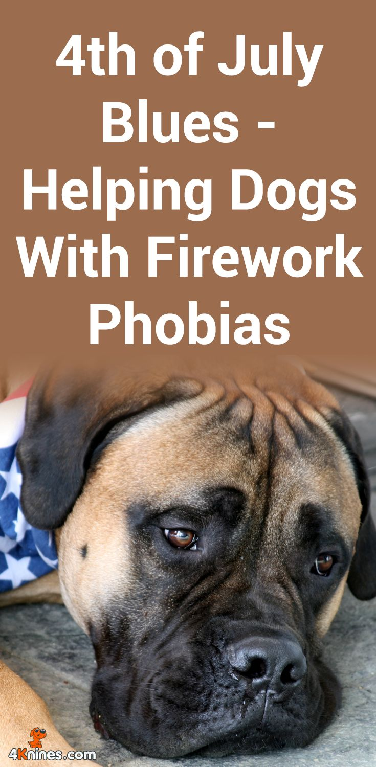Is your dog scared of fireworks? Here's ONE simple thing you can do to help calm your dog down.