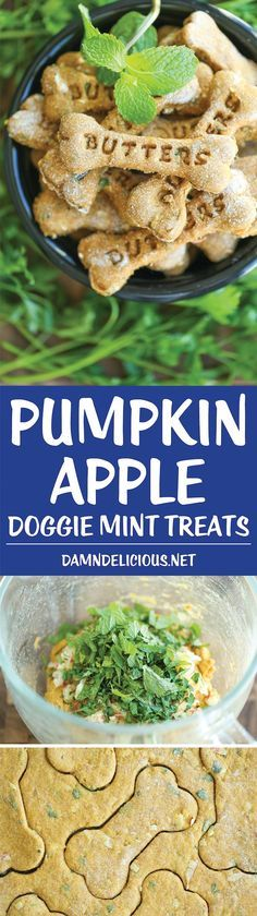 Pumpkin apple mint dog treats are perfect for freshening bad breath in dogs. Try this homemade dog treat recipe!