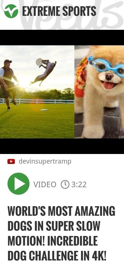 World's Most Amazing Dogs in Super Slow Motion! Incredible Dog Challenge in 4K!   #stlouis #stl   http://veeds.com/i/jzLlJE5xkk0oj-zU/extreme/