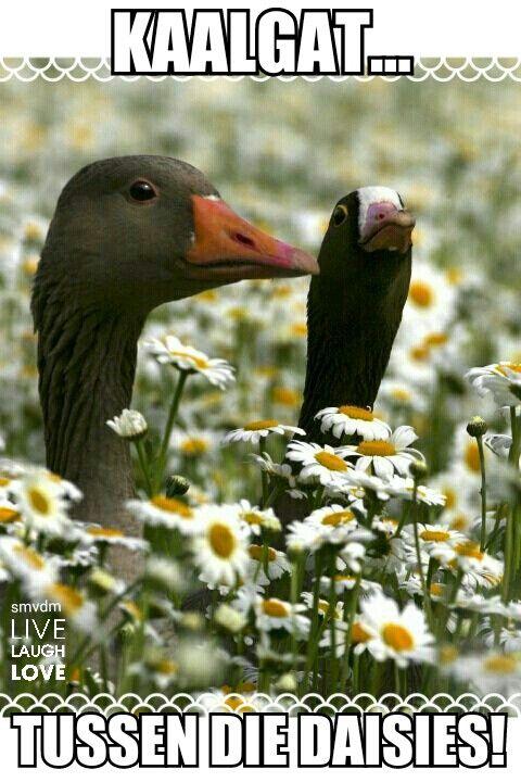 Kaalgat tussen die daisies!