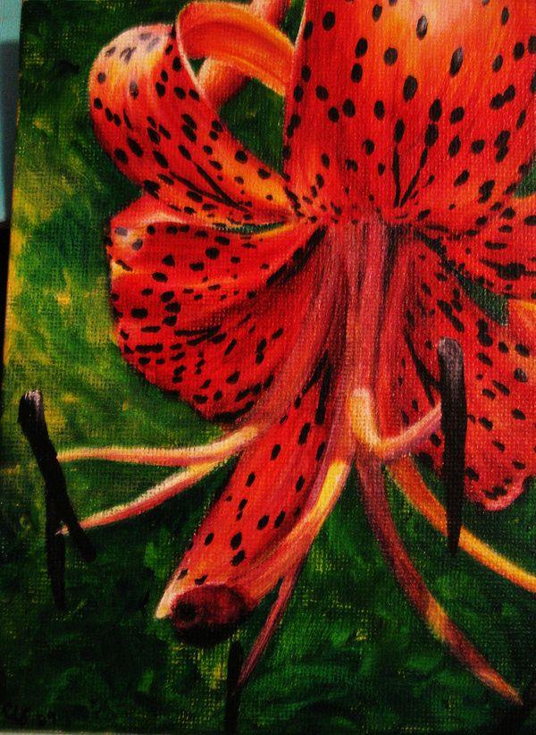 Tiger Lily | Botanical art | Pinterest | Lilies, Tiger ...