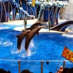Originally published as MY DAY AT SEA WORLD  by Hayden of Disney with Babies, Toddlers & Preschoolers  My family and I visited Sea World Orlando in May. This was our first visit and we absolutely loved Sea World!  2014 is their 50th anniversary and tickets were available for sale buy one ticket get one free!   We spent a whole day at Sea World but I would recommend planning to spend two days if possible to allow time to watch all of the wonderful shows and be able to ride all of the rides…
