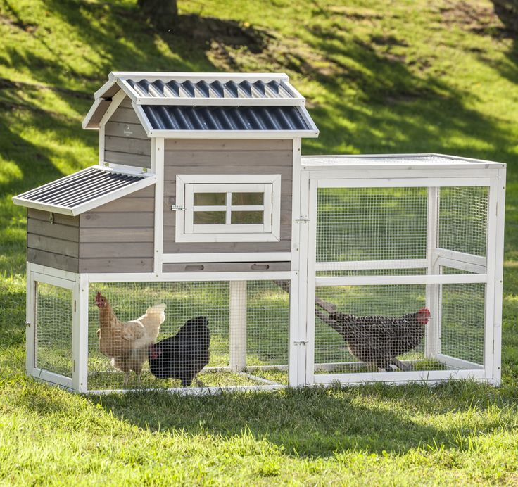 Features:  -Sized to accommodatefourhens, assuming they are free-ranged during the day. If you arenot able to give your chickens access to your yard during the day, they recommend keeping only two