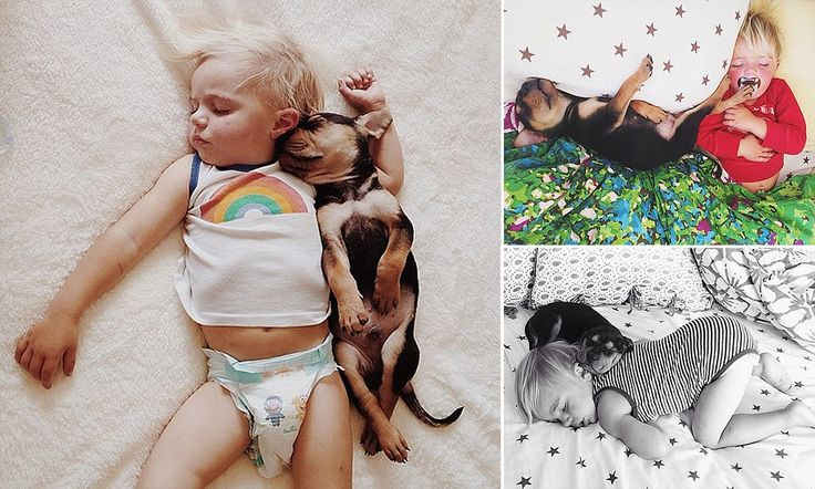 Cuteness level: head pop. Beau and his 'puppy brother' Theo take naps every day together