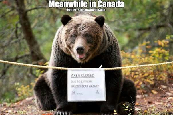 Canada and grizzlies