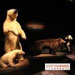 Espèces d'Ours, l'expo au Muséum National d'Histoire Naturelle