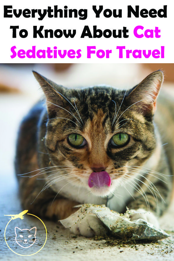 Safely Travel with Your Cat Pets, Pet advice, Cat training