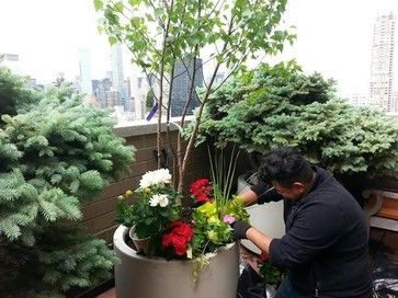 #Newyorkplantings crew member planting large trees, flowers with soil on a roof top garden project NYC. For more details visit our blog http://www.newyorkplantings.com/. New York Plantings Garden Designers and Landscape contracting 432 E 14st  New York, NY 10009 Call: 347-558-7051  info@newyorkplantings.com