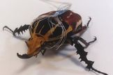 Scientists Hijack Bugs, Turn Them into Cyborgs http://whtc.co/92se