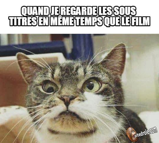 Les sous-titres...   Trucs drôles   Image drole animaux, Chat humour et Blague chat