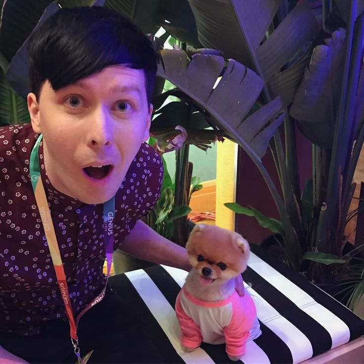 "Polubienia: 279.5 tys., komentarze: 4,029 – @amazingphil na Instagramie: ""This dog is so cute I actually died and and i'm posting this picture from the afterlife"""