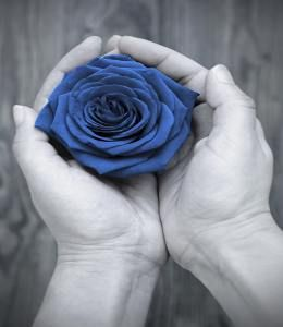 If you can manage to find the pot of gold at the end of the rainbow, then you may as well, come across the blue rose. The meaning of blue rose is as fictional as the rose itself. Being an element of imagination, blue rose has always been portrayed in art and literature.