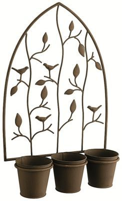 Vines are growing out of the pots before you even plant them... :) £14.95