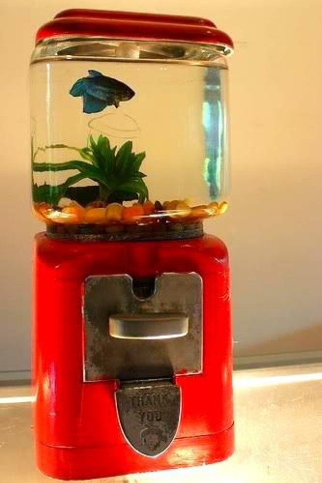 Nice way to re-purpose an old gumball machine...into a fish aquarium! I wonder if you can get rocks/marbles that look like gumballs?