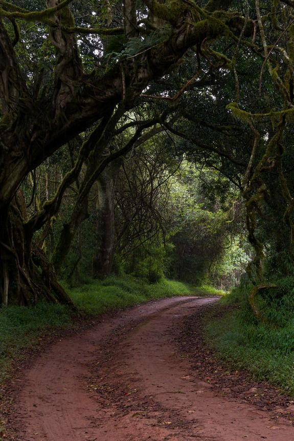 http://lunarra.tumblr.com/post/82888709343/disminucion-a-forest-marc-billon