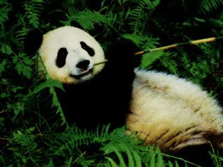 the Huckleberry Finns of the animal world