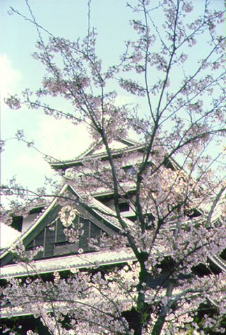 Cherry tree of Matsue-jo Castle. Looking for more information aboout Shimane? Go Visit Matsue Tourist Association.  http://www.kankou-matsue.jp/