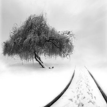 Untitled by Sherry Akrami