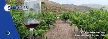 la ruta del vino ensenada baja california
