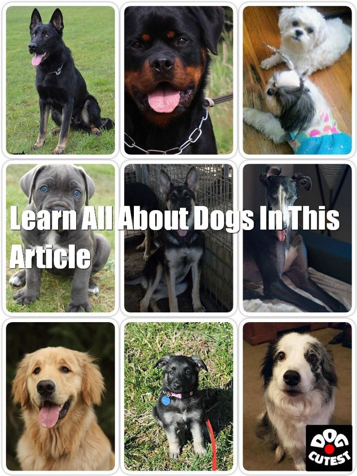 Want Information About Dogs? Try to find Good Tips Here