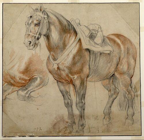 Peter Paul Rubens, Gesatteltes Pferd, 1615-1618 © Albertina, Wien