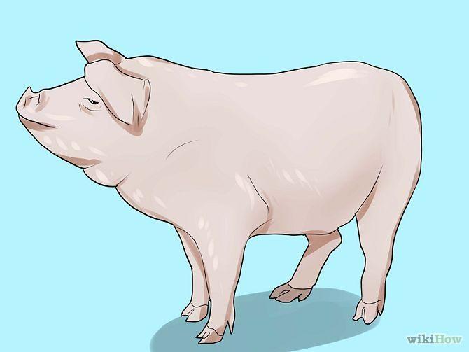 How to Care for a Pet Pig via wikiHow.com