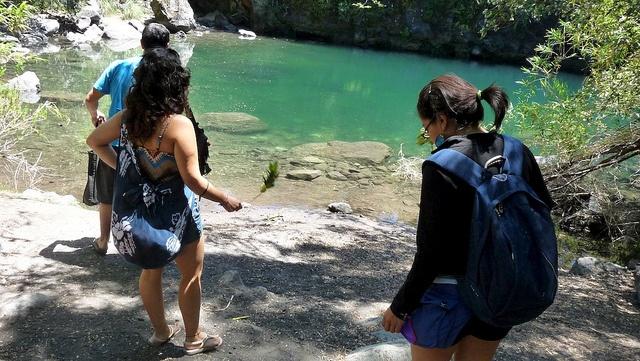Trekking in the Petrohue forests #petrohue #southchile #patagonia #caminoensenada #tours #bordemundo #chile