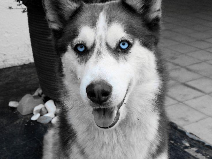 Xenia <3    https://www.facebook.com/Deborah-Verwey-Photography-1476207782685276/?ref=aymt_homepage_panel