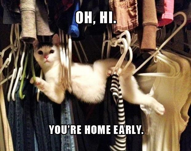 Oh, Hi... #catoftheday