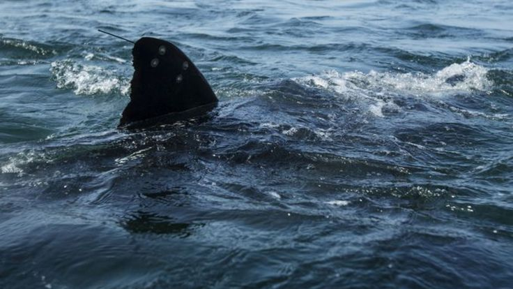 Katharine the great white shark tops 10,000 miles