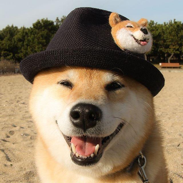 Maru on Maru✨火曜日おつまる〜*(^o^)/* パパのお帽子借りちゃった〜 @canon_eosm でもまるの写真があるからチェックしてね〜 #ブログでまる活情報更新したよ #明日は生き物にサンキューでまるのお留守番初公開